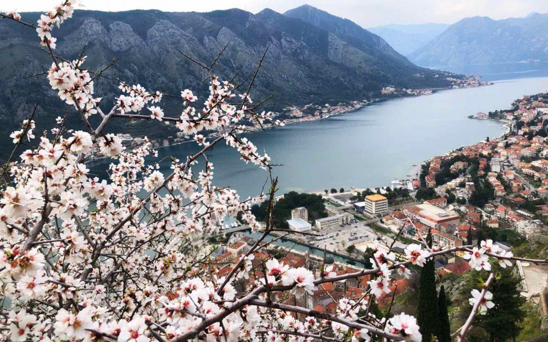 Pearl of Montenegro. Boko-Kotor Bay